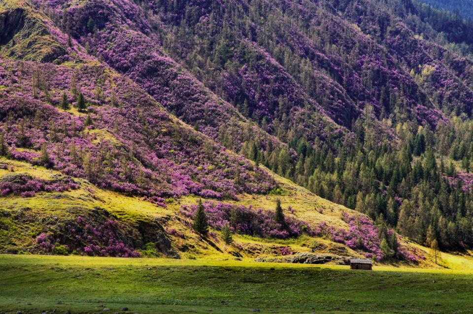 апрель в Горном Алтае